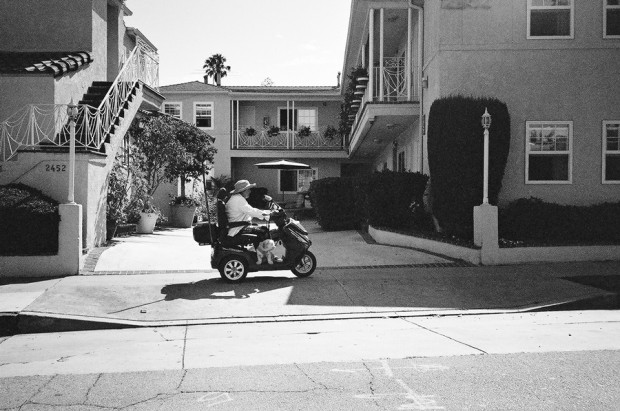 Nick Zegel Scooter with a Doggie